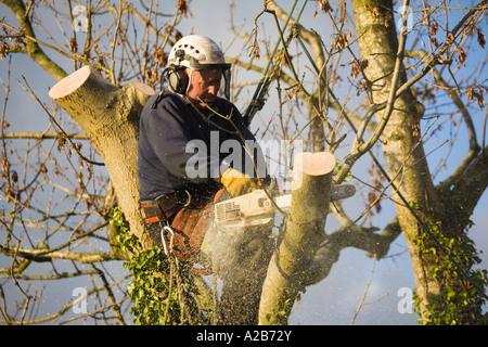 Klettergurt Für Baumpflege : Baumpfleger in aktion tragen helm visier ohr protektoren klettergurt