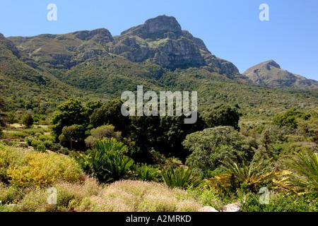 Ein Blick auf die Rückseite des Tafelberges von Kirstenbosch Botanical Gardens in Kapstadt. - Stockfoto