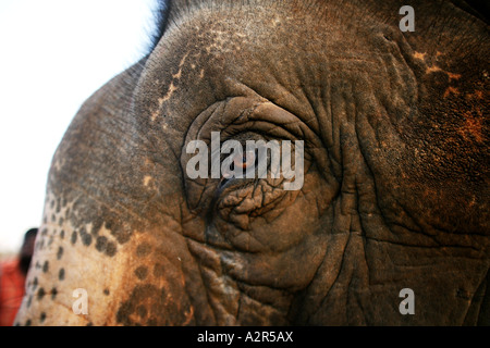 Nahaufnahme des indischen Elefanten im Auge. - Stockfoto
