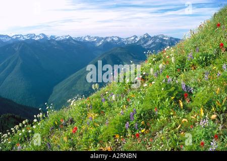 Valhalla-Palette in Selkirk Mountains, BC, British Columbia, Kanada - Kootenay Region - Stockfoto
