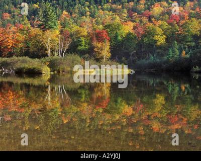 Willey Teich reflektiert Herbstfarben - Stockfoto