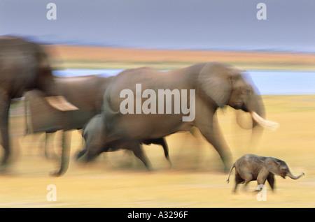 Elefantenfamilie - Stockfoto