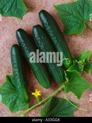 Landwirtschaft - Gurken auf eine braune strukturierte Oberfläche, im Studio. - Stockfoto