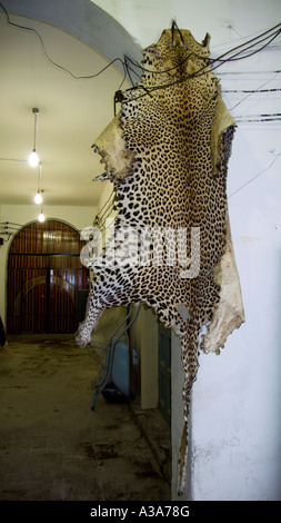 Leopardenfell im Souk Touist Tripolis Libyen - Stockfoto