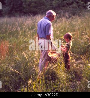 Großvater und Enkel, die Kommissionierung Weizen in einem Feld an einem sonnigen Tag - Stockfoto