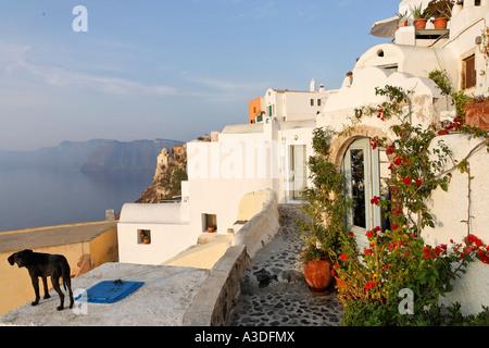 Häuser im typisch kykladischen Architektur, Oia, Santorini, Griechenland - Stockfoto