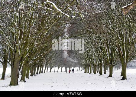 Familienausflug in die Bäume 3-Radley College - Stockfoto
