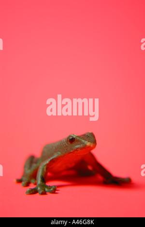 Spielzeug-Frosch - Stockfoto