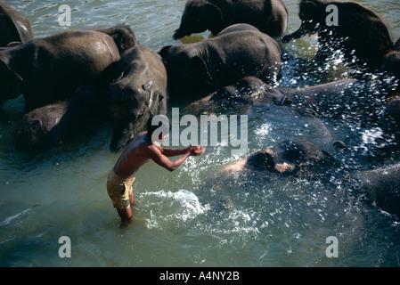 Elefanten Baden in Maha Oya Kegalle Bezirk Sri Lanka Asien - Stockfoto