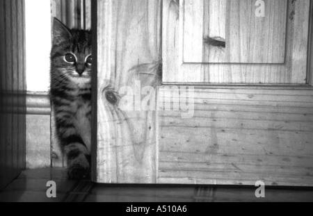 Eine schüchterne Kätzchen - Stockfoto