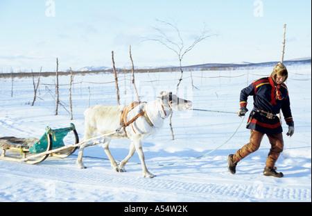 Nils Ante Kuhumen Sami Lapp Rentierzüchter auf seine traditionellen Schlitten gezogen von Rentieren in Schwedisch - Stockfoto