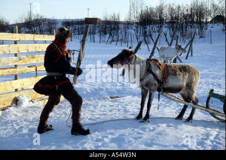 Nils Ante Kuhumen Sami Lapp Rentierzüchter auf seine traditionellen Schlitten gezogen von Rentieren im schwedischen - Stockfoto