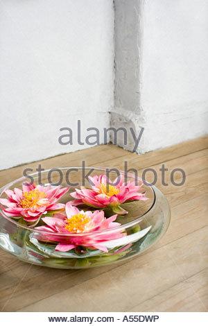pflanzen und eine glassch ssel stockfoto bild 21884687 alamy. Black Bedroom Furniture Sets. Home Design Ideas