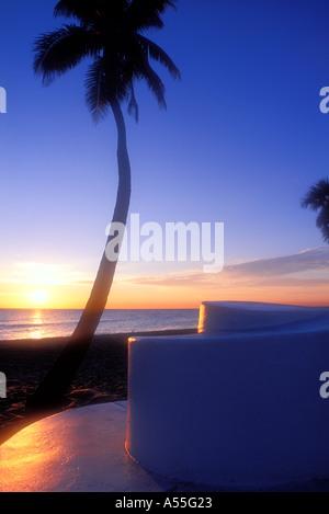 Palmen am Strand von Fort Lauderdale Florida USA - Stockfoto