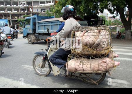 Painet iy8647 Vietnam Mann männlicher tragenden Schweine Markt Motorrad Hanoi Foto 2005 Land sich entwickelnde Nation - Stockfoto