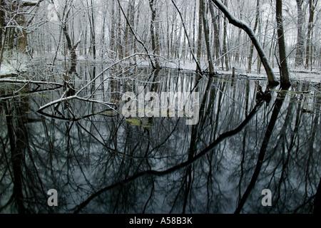 Schneebedeckte Bäume im Wald Illinois Busey - Stockfoto