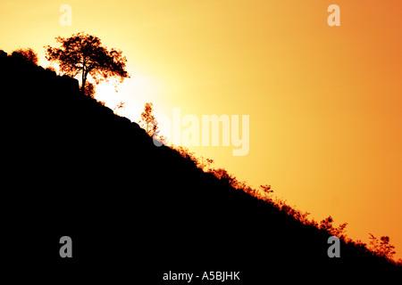 Silhouette Profil eines Baumes an einem Hang in der indischen Landschaft gegen einen Sonnenuntergang Digital erweitert - Stockfoto