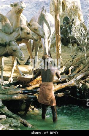 Turkana junge Mann Bewässerung Kamele in der Nähe von Mount Nyiro nördlichen Kenia in Ostafrika - Stockfoto