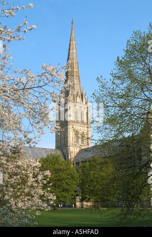 Salisbury Kathedrale spire - Stockfoto