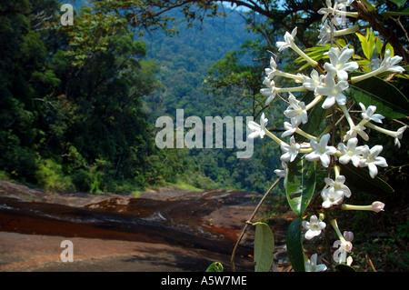 Tropischer Regenwald, Lager 1, Marojejy Nationalparks, Madagaskar ...