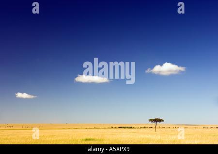 Wolken am blauen Himmel über der kenianischen Savanne Masai Mara Nationalpark Kenia - Stockfoto