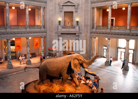 Washington, National History Museum, Exponat - Stockfoto