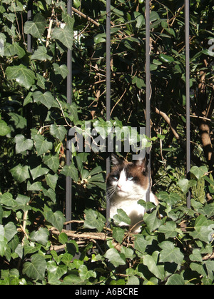 Katze im Unterholz - Stockfoto