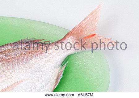 Fischschwanz - Stockfoto