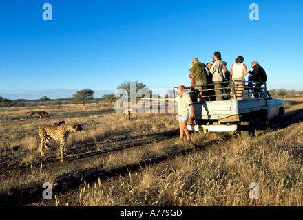 Eine alte LKW mit Touristen gefüttert ihr Führer in dieser Notunterkunft Gepard Geparden beobachten abholen. - Stockfoto