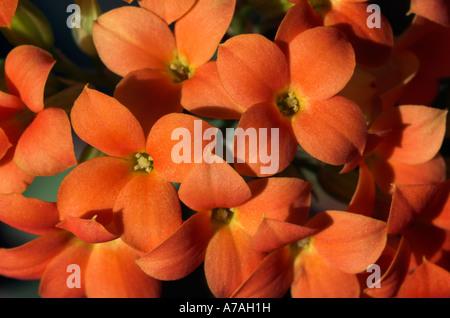 Leuchtend orange Blüten - Stockfoto