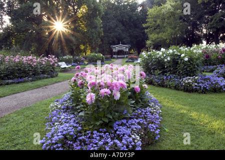 Georgina (Dahlia spec.), Garten, Dahlien, Deutschland, Baden-Württemberg, Baden-Baden - Stockfoto