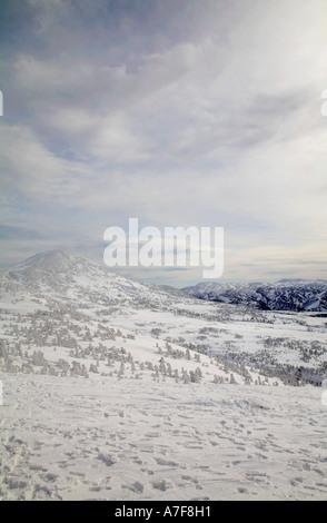 Aomori verschneite Berglandschaft Schnee Monster Eis bedeckt Bäume Verwaltungssitz Berg Aomori Tohoku Japan Winter - Stockfoto