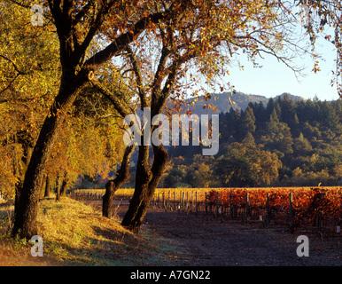 USA, Kalifornien, Napa Valley, Calistoga. Morgensonne überfliegt den Talboden und die Eichen und Weinberge. - Stockfoto