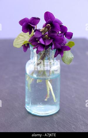 Veilchen in einer Glasvase - Stockfoto