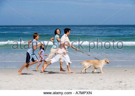 Zwei Generationen Hund der Familie zu Fuß am Strand Profil Meer im Hintergrund - Stockfoto