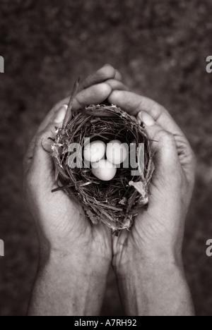 Hände halten ein Nest und drei Eiern Notgroschen Einsparungen Konzept - Stockfoto
