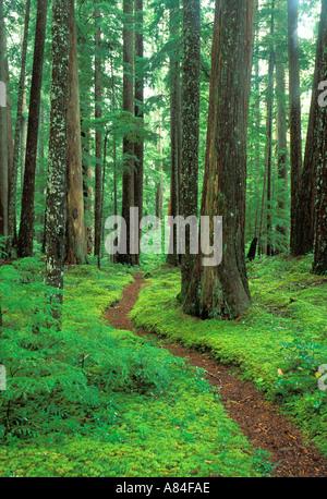 Trail durch alten Waldbestands Downey Creek Trail Cascade Mountains Washington - Stockfoto