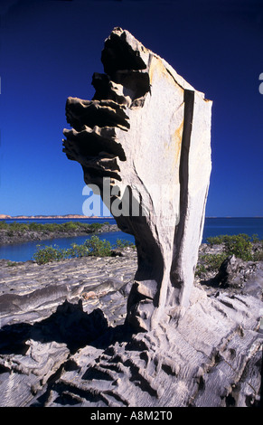 Schlamm Steinbildung Edoline Insel Buccaneer Archipel NW Kimberley Küste Westaustraliens vertikal - Stockfoto