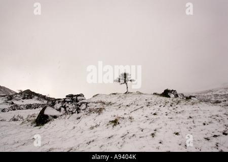 Ein einsamer Baum in einem Schneesturm Schnee in eine verschneite Landschaft in der Cooley Bergen County Louth Irland - Stockfoto