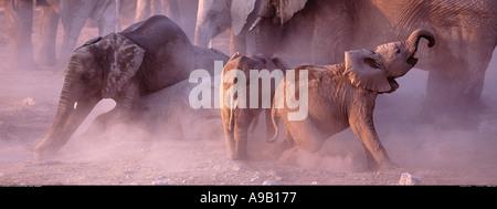 Junge Elefanten in den Staub der Etosha Nationalpark Namibia - Stockfoto