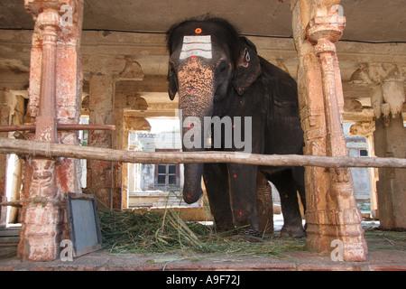 Lakshmi, Virupaksha Tempel Elefant in der alten Stadt von Vijayanagar, Hampi, nördlichen Karnataka, Indien - Stockfoto