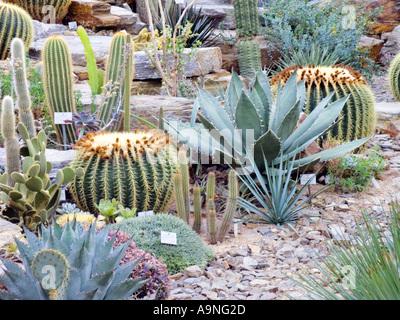 Kaktus haus botanischer garten m nchen bayern deutschland europa stockfoto bild 34621236 - Gewachshaus garten ...