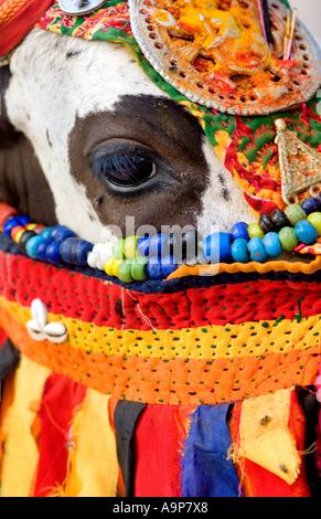 Indische heilige Kuh gekleidet in bunten hindu Kostüm verehrt und angebetet. Andhra Pradesh, Indien - Stockfoto
