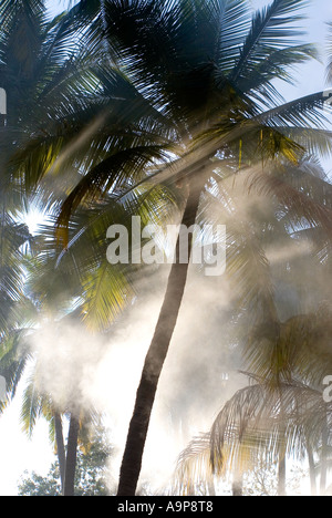 Morgen-Splitter von Sonnenlicht, das durch Palmen in Südindien - Stockfoto