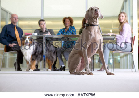 Geschäftsleute in einer Besprechung mit Hunden - Stockfoto