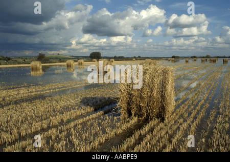 Hay Bails auf überfluteten Gebiet an der Somerset Levels Somerset England - Stockfoto