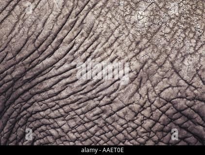 Nahaufnahme von afrikanischen Elefanten Haut - Stockfoto