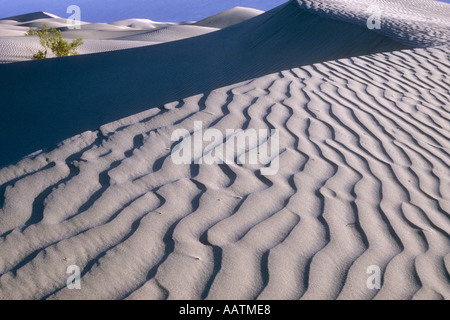 Mesquite flache Sanddünen im Morgengrauen Death Valley Nationalpark Kalifornien USA - Stockfoto