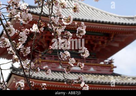Japanische Pagode in der Kiyomizudera Tempelkomplex umgeben von Kirschblüten in Kyoto Japan - Stockfoto