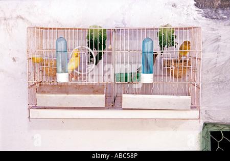 Vogelkäfig vor Haus in Spanien - Stockfoto